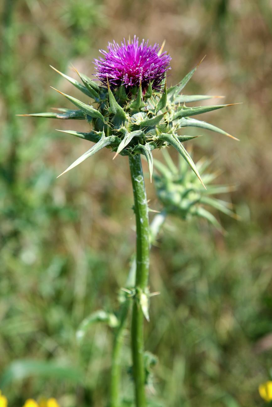 צילום צמחי בר